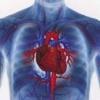 Врожденные пороки сердца - классификация