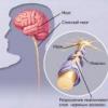 Заболевание рассеянный склероз у человека