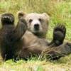 Желчь медведя: применение, лечение, лечебные свойства
